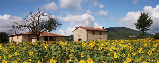 Apartment farmhouse in Tuscany: vacations in Maremma
