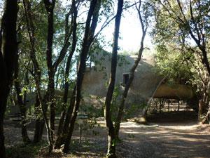 Baratti house in woods, Maremma Tuscany Italy