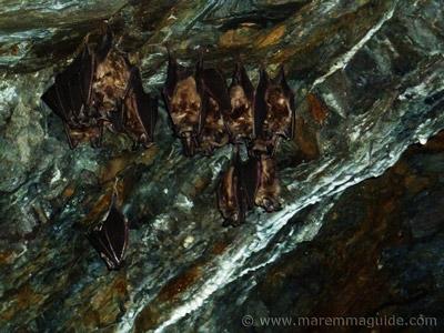 Bats in Italy