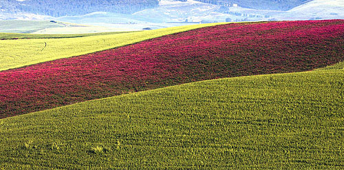 Best time to visit Italy: Spring in Tuscany