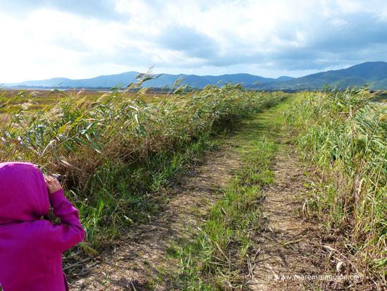 Birdwatching in Tuscany in the Riserva Naturale Diaccia Botrona