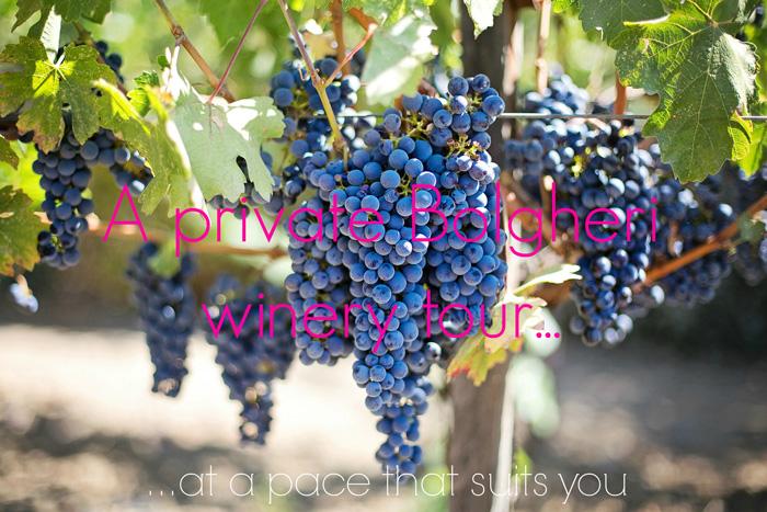 Priavte guided Bolgheri winery tour