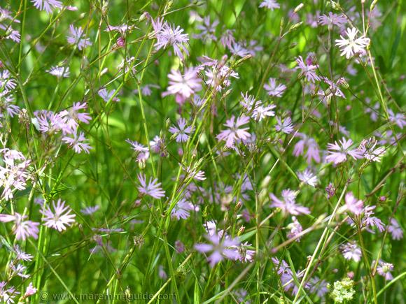 Bosco della Sterpaia spring wild flowers