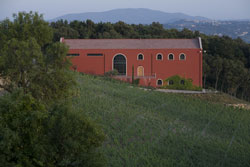 Tuscany vineyard and winery Caiarossa in Riparbella, Maremma Italy
