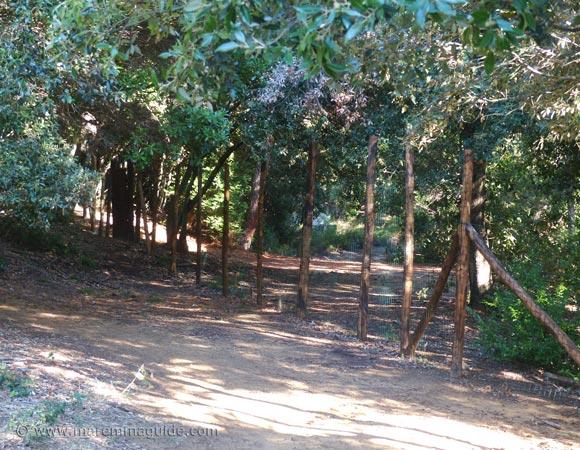 Fenced footpath through the Bandite di Scarlino nature reserve.