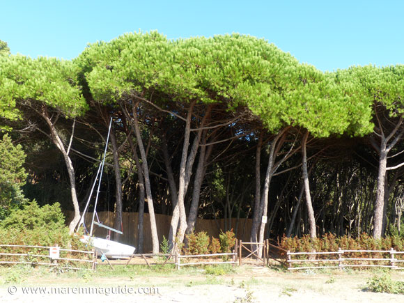 Cala Civette pineta - pine woods behind the beach.