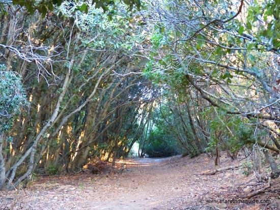 Cala di Castello di Punta Ala pathway