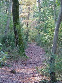 Footpath through the woods to Cala Violina
