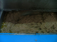 the olive paste during the cold press method of extraction