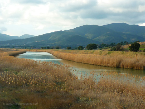 Reserva Naturale della Diaccia Botrona, Castiglione della Pescaia Maremma Tuscany