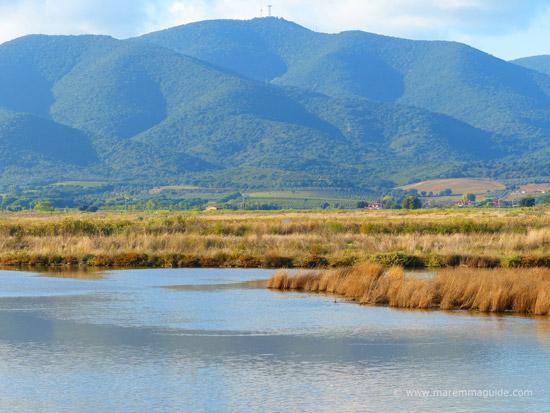 La Riserva Naturale della Diaccia Botrona Castiglione della Pescaia Toscana