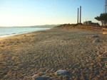 Dog Beach Piombino Riotorto Maremma Tuscany