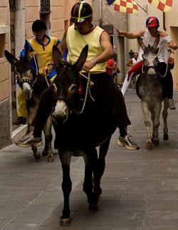 The donkey Palio dei Ciuchi Festa di San Lorenzo, Monterotondo Marittimo, Maremma