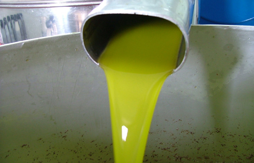 How to make olive oil: Olio Extravergine Toscano