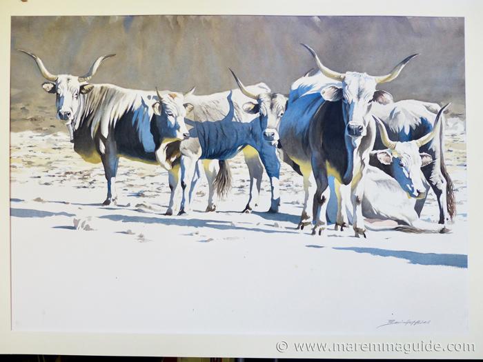 Federico Gemma watercolour: Maremmano cattle in Maremma Tuscany.