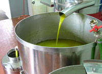 Picture of olive oil: first cold press olive oil