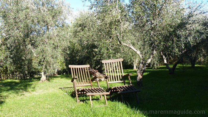 House for sale in Tuscany with 30 olive trees.