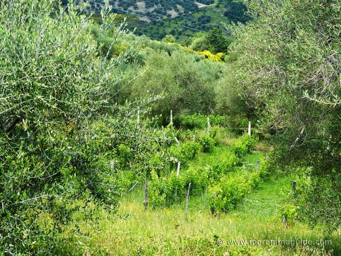Properties vineyard