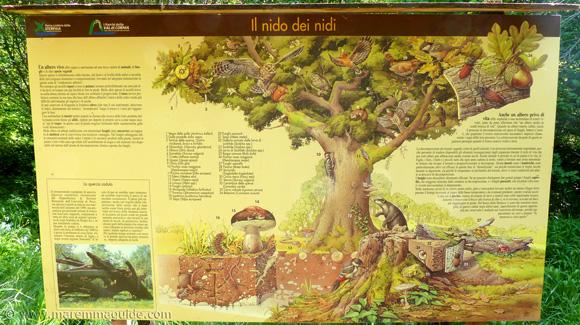 Il nio dei nidi Bosco della Sterpaia