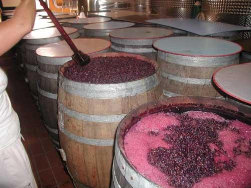 Italian Wineries in La Maremma Italy