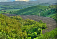 Maremma landscape: at the end of the wood