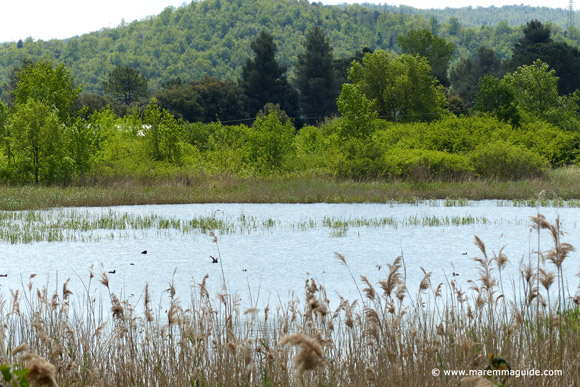 Lago Boracifero lake, Monterotondo Marittimo, Maremma Tuscany