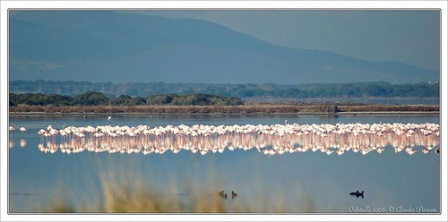 Maremma Italy Landscape: Laguna di Orbetello with flamingos