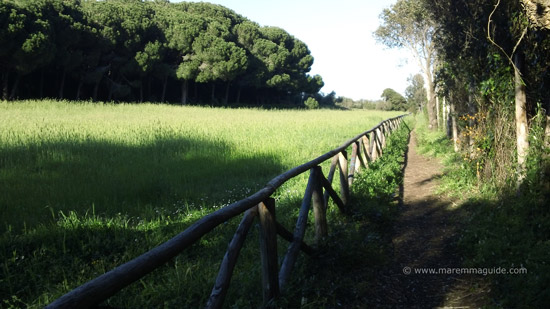 Coastal footpath to Lo Stellino cove Populonia Tuscany