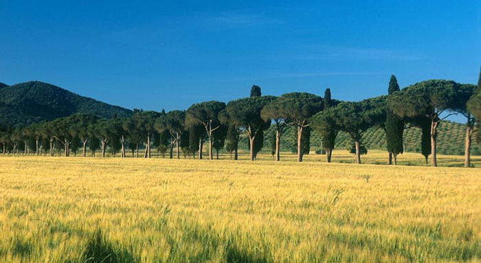Driveway to L'Andana Tenuta La Badiola