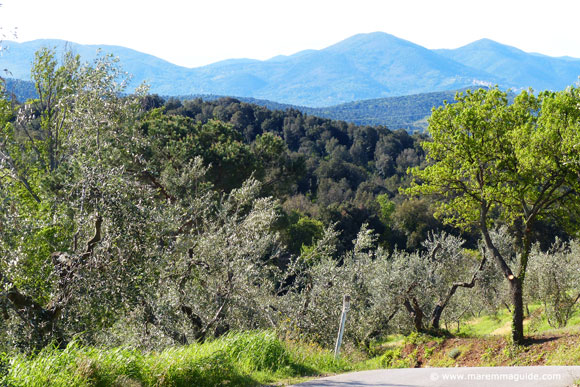 Maremma countryside in spring