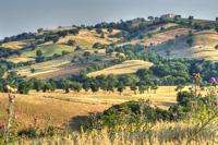 Scenery landscape Pictures: Colline di Maremma Grossetana near Preselle, Scansano