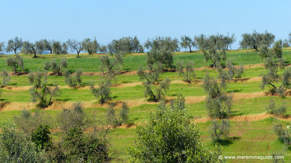 Tuscany countryside in April Maremma