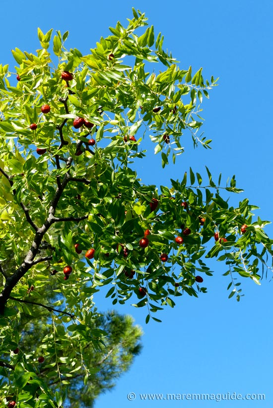 Maremma fruits in autumn