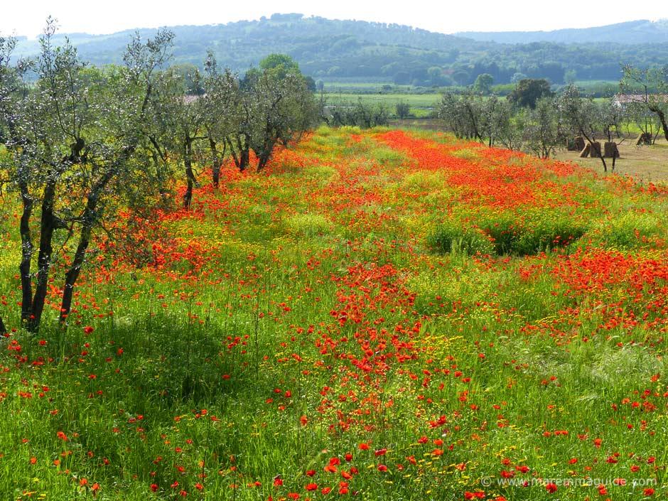 Maremma Region Italy