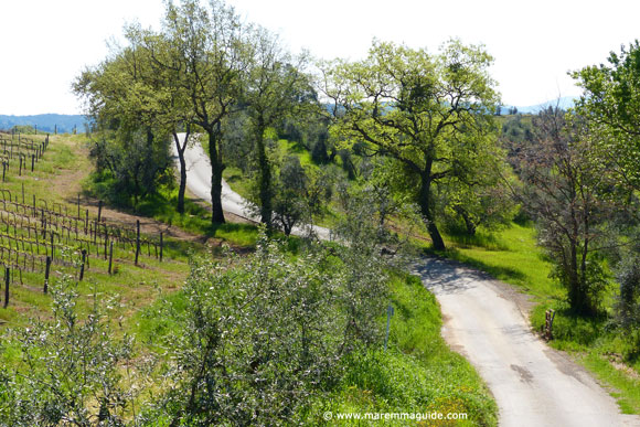Maremma country road in Tuscany in spring