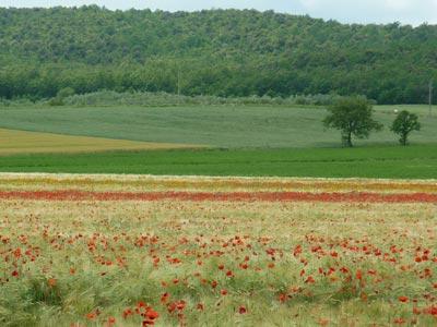 Maremma Tuscany in Spring