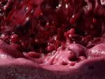 Maremma Wine Tuscany Italy