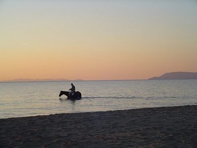 Maremmano Horse in the sea in Maremma, Italy