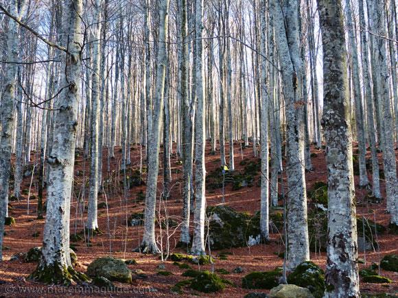 Monte Amiata Maremma in autumn.