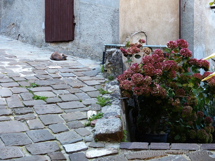Cat sleeping on stone-paved street in Montelaterone Maremma Tuscany.