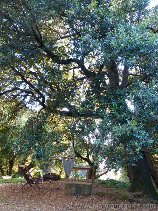 Old Tuscany farmhouse for sale: hammock tied to ancient tree in garden.