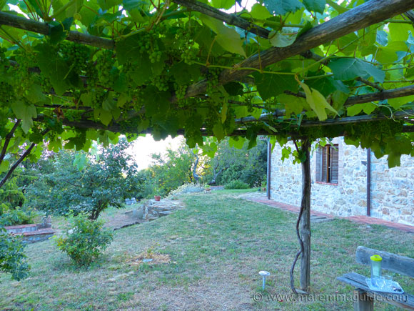 Fragola grapes in a pergola: Tuscany farmhouse for sale
