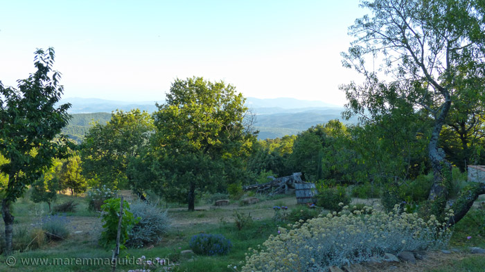 Maremma farmhouse for sale: the garden with a view