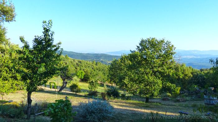 Tuscany farmhouse garden.