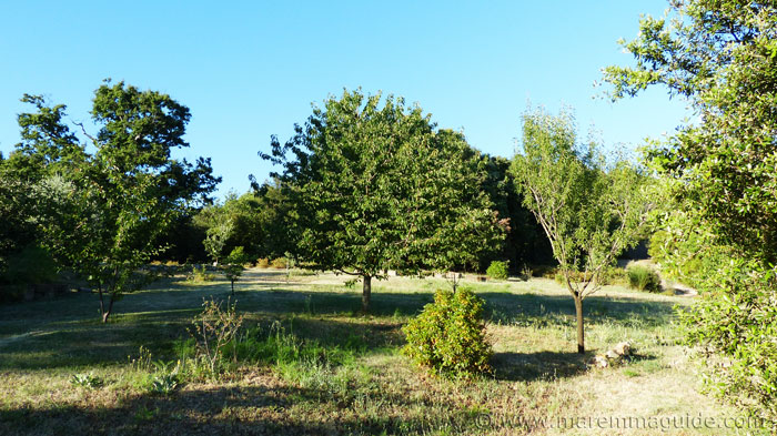 Pear trees in Tuscany garden.