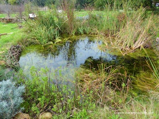 Orbetello lagoon botanical garden Maremma Tuscany Italy