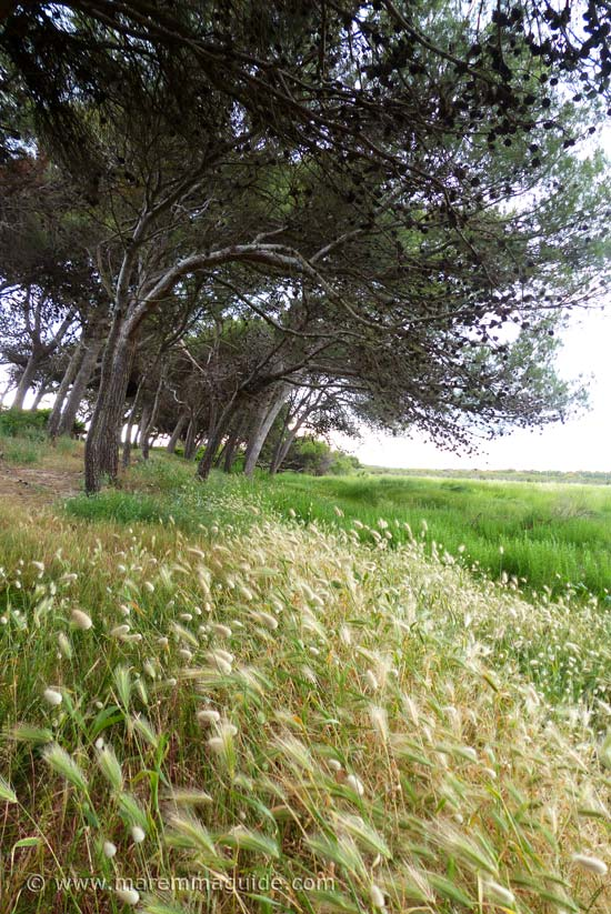 Area Naturale Protetta di Interesse Locale Sterpaia Toscana.