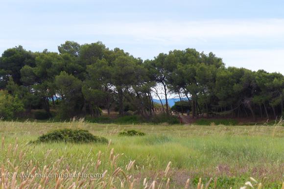 Il Pino beach pineta, Piombino Tuscany Italy.