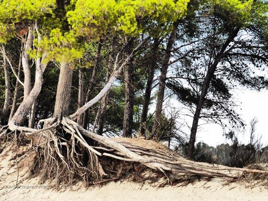 Parco Naturale della Sterpaia Tuscany