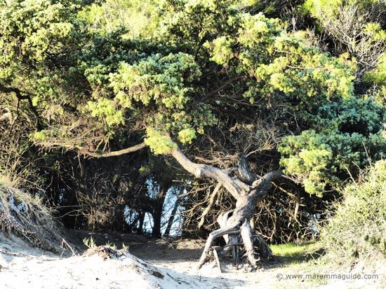 Maremma coastal park: Parco Naturale della Sterpaia